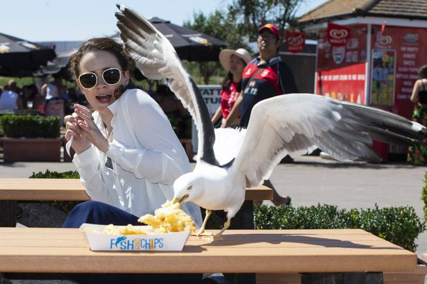 Staring at a seagull will stop it stealing your food, scientists claim